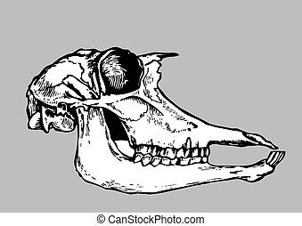 skull silhouette on gray background, vector illustration
