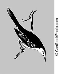 thrush silhouette on gray  background, vector illustration