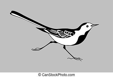 wagtail silhouette on gray background, vector illustration