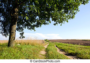 Background gravel road agricultural field oak tree -...