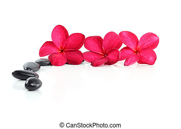 zen stones with red frangipani flower and text space on white