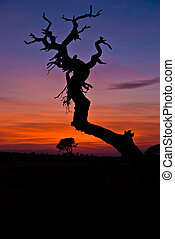 Tree Holding the Sky - Mexican sunset with dead Mesquite in...