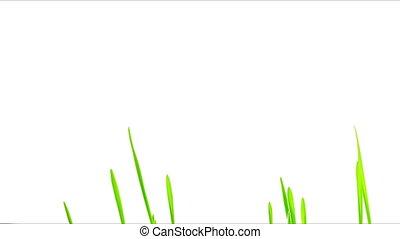 Green Grass Growing Timelapse