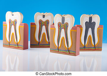 Tooth anatomy - Tooth anatomy