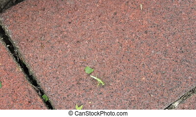 Busy Ants Carry Off Recent Kill - Busy ants carry off the...