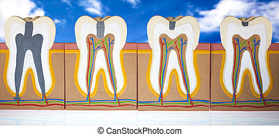 Human tooth structure - Human tooth structure