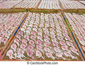 drying squid on the net, product from Thailand