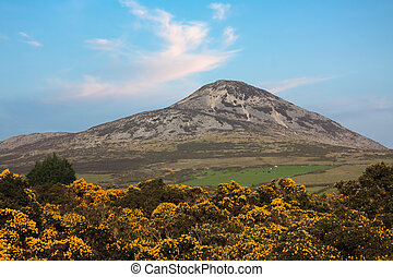 Great Sugarloaf & Yellow Peaflowers