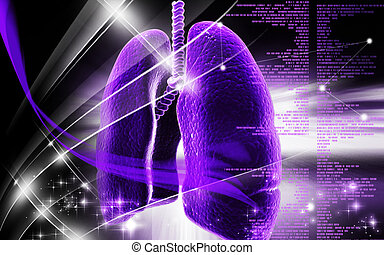 Human lungs - Digital illustration of human lungs in colour...