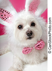 Pretty fluffy white dog in fancy bunny costume - An adorable...
