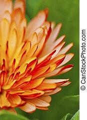 Orange petal flower in spring