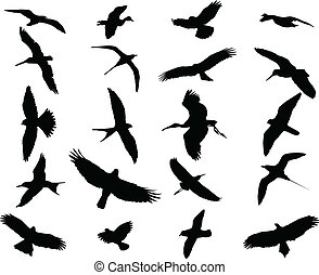 Pássaros, cobrança