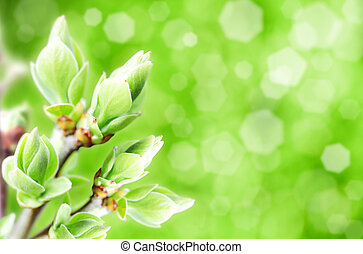blossomed buds, abstract natural backgrounds with blured...
