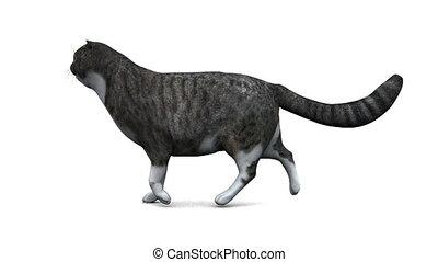 cat - image of cat
