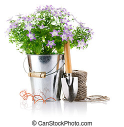 flowers in bucket with garden tools isolated on white...
