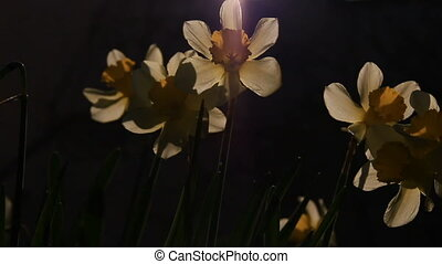 Backlight sunlights on the flowers - Backlight sunlights on...