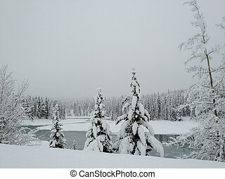 snow covered pine trees - snow covered pines trees along...