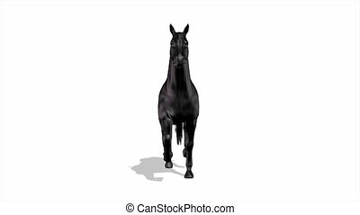 horse - image of horse