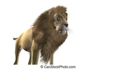 lion - image of male lion