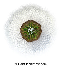 3d Generated Dandelion Seed Pattern, Viewed from Bottom