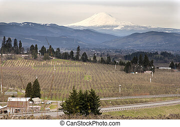 Pear Orchard in Hood River Oregon - Pear Orchards in Hood...