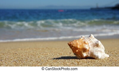 Seashell - A Seashell laying on the beach.