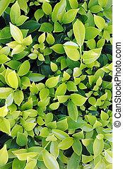 Many leaf background