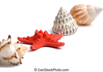 sea shells isolated