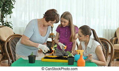 Young plants - Family of three planting seedlings into a...