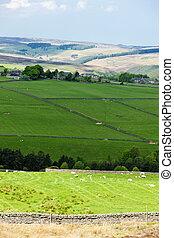 The Pennines, Northumberland, England