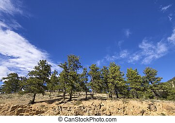 Rocky Mountain National Park - Forest in Rocky Mountain...