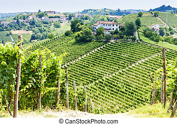 vineyar near Tana, Asti Region, Piedmont, Italy