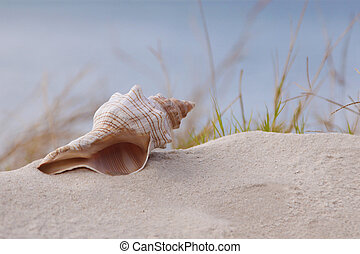Shell - Simple sea shell sits atop a sand dune at the beach
