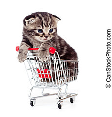 little kitten sitting in shopping cart isolated on white