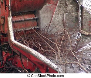 Crane chop tree branch - crane feeding tree branches in...