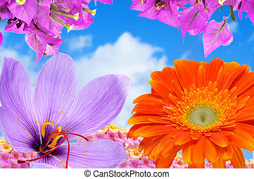 spring flowers - a frame with different flowers over the...