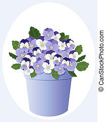 pot of violas
