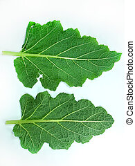 Leaf of a broccoli on a white background