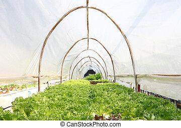 蔬菜, 營養液培養, 農場