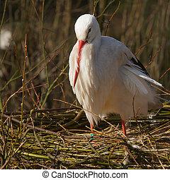A stork on a nest