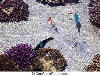 Eilat Oceanarium Fish 2005 - Fish in Eilat Oceanarium,...