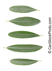 Olive leaves collection isolated on white, clipping path...