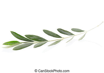 Olive branch, peace symbol - Olive branch leaves isolated on...