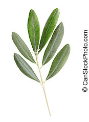 Olive branch with leaves - Olive branch and leaves isolated...