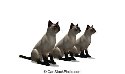 cats - standing cats