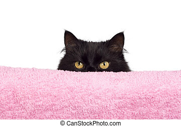 escondendo, pretas, gato