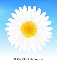 Daisy - One Daisy Against Blue Sky, Vector Illustration