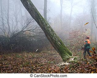 Leñador, bosque
