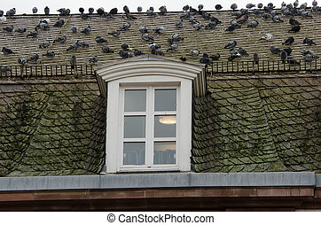 the roof with pigeons
