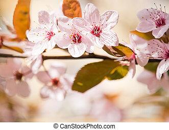 In bloom. - In bloom, delicate colorful spring flowers lit...